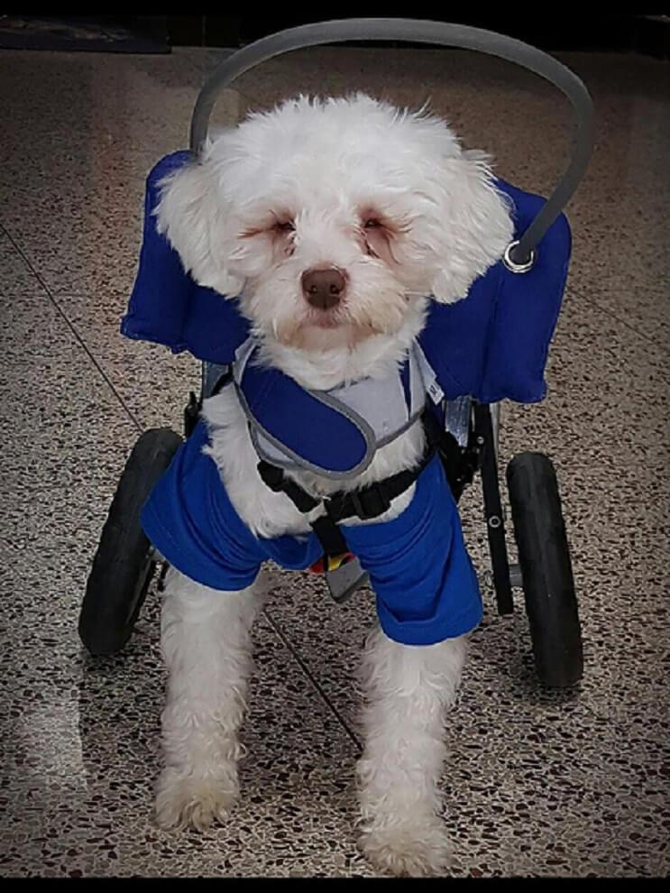 Superación de perrito ciego ayuda a miles de personas 04