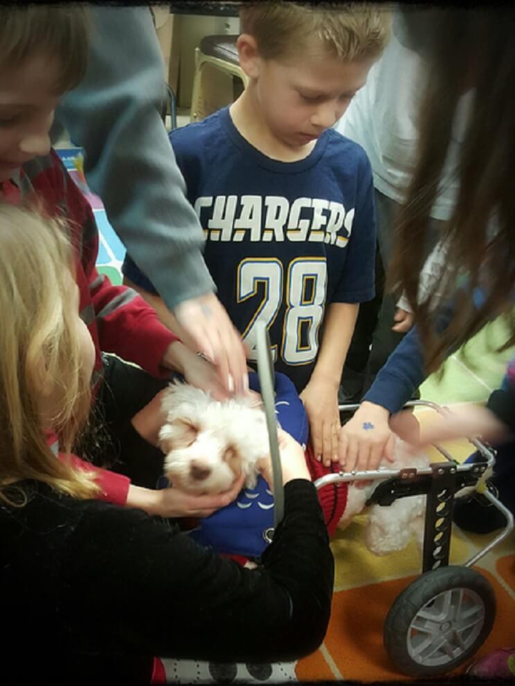 Superación de perrito ciego ayuda a miles de personas 05