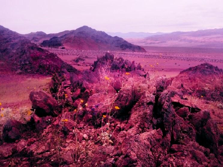 Te sorprenderás con estas fotografías surreales de flores que no tienen nada de Photoshop 02