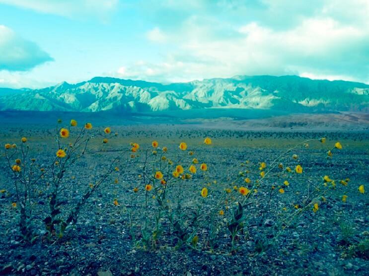 Te sorprenderás con estas fotografías surreales de flores que no tienen nada de Photoshop 03