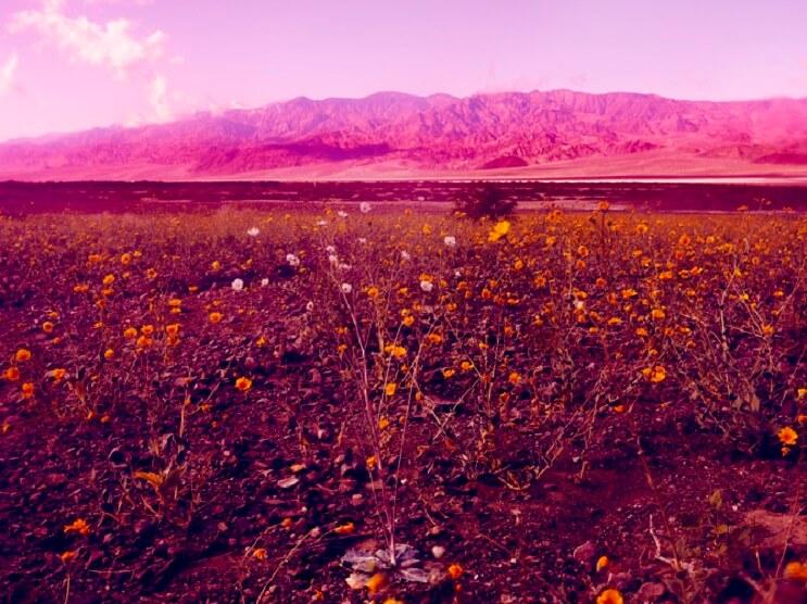 Te sorprenderás con estas fotografías surreales de flores que no tienen nada de Photoshop 04