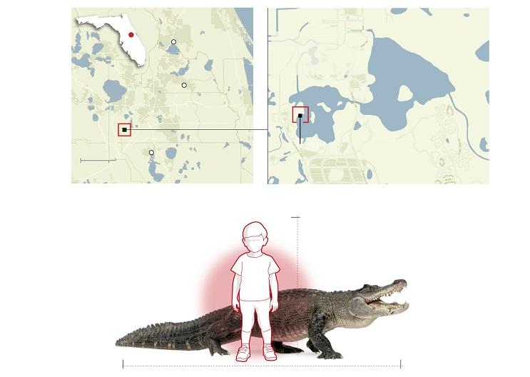 Trágica muerte de niño por caimán desata nuevamente polémica sobre la convivencia entre humanos y animales salvajes 4