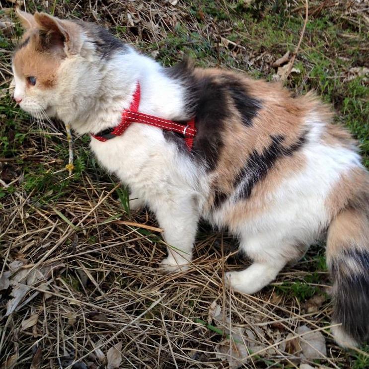 Una gata ciega escaló la montaña más alta de Irlanda con fines benéficos 2