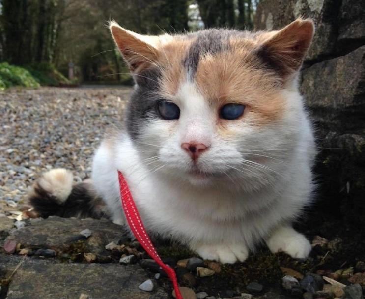 Una gata ciega escaló la montaña más alta de Irlanda con fines benéficos 3