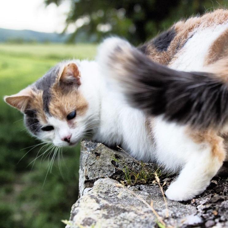 Una gata ciega escaló la montaña más alta de Irlanda con fines benéficos 4
