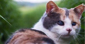 Una gata ciega escaló la montaña más alta de Irlanda con fines benéficos