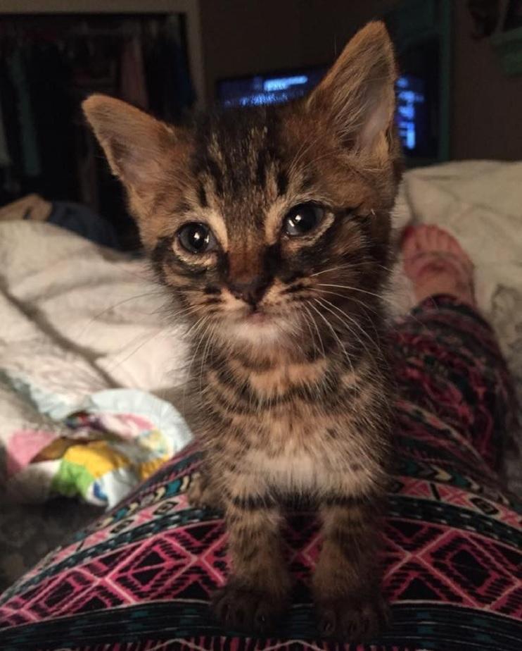 Una niña de 5 años y el gatito que ayudó a salvar se han vuelto inseparables 4