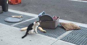 Este gato fue abandonado con todas sus pertenencias pero tuvo un final feliz