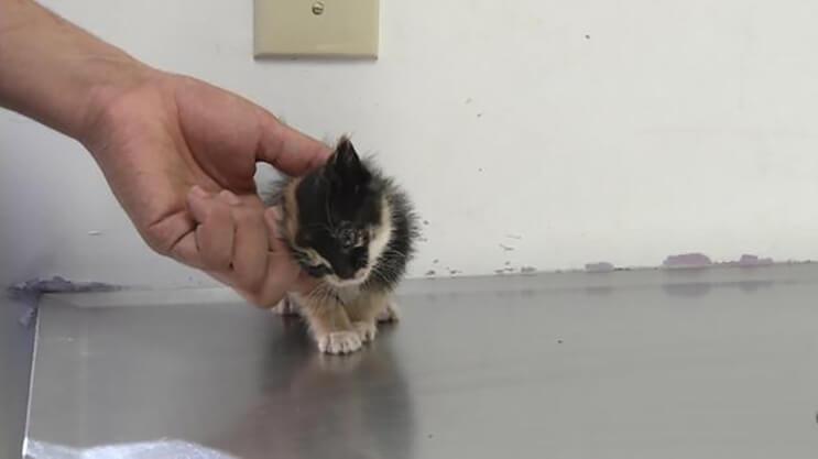 gato encontrado en basurero4