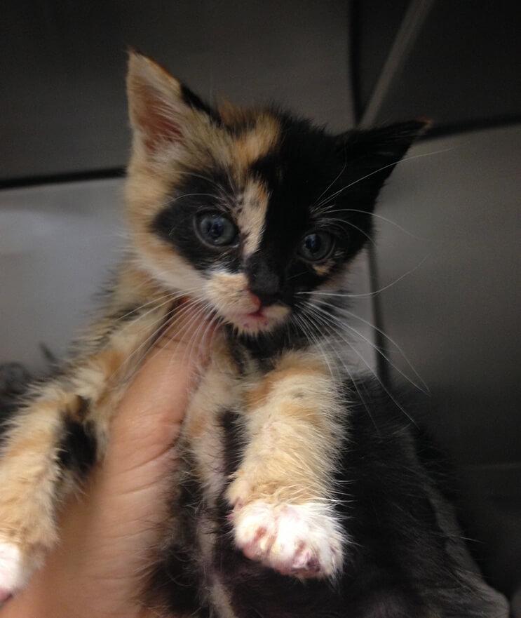gato encontrado en basurero5