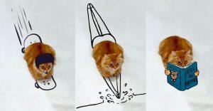 Internet trollea a este gato y el resultado es fenomenal
