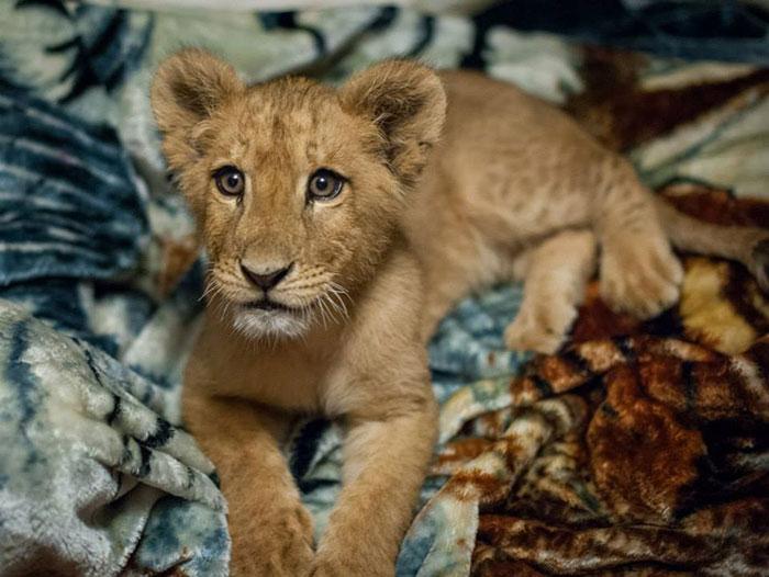 lambert-leon