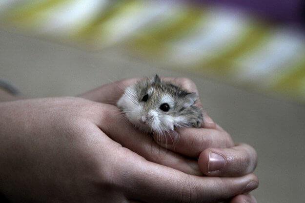 20 fotos de animales recién nacidos que te robarán el corazón 04