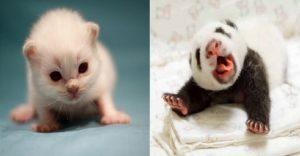 20 fotos de animales recién nacidos que te robarán el corazón