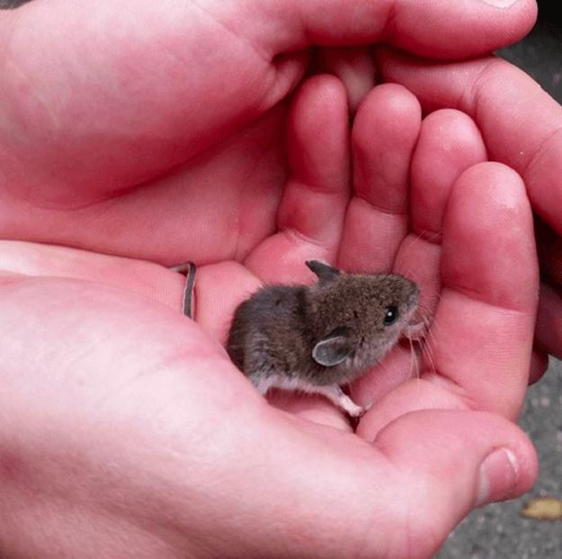 20 fotos de animales recién nacidos que te robarán el corazón 17
