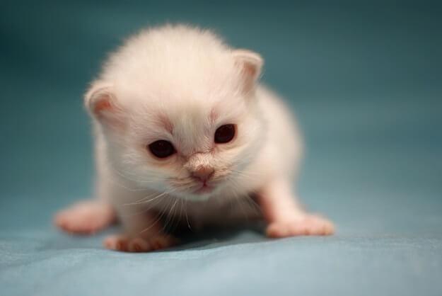 20 fotos de animales recién nacidos que te robarán el corazón 18