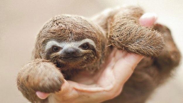 20 fotos de animales recién nacidos que te robarán el corazón 24