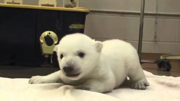20 fotos de animales recién nacidos que te robarán el corazón 25