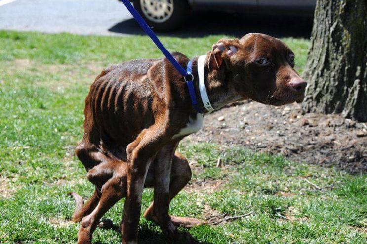 A este perro lo dieron por muerto pero se aferró a la vida y hoy tiene una segunda oportunidad 01