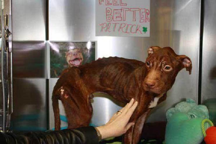 A este perro lo dieron por muerto pero se aferró a la vida y hoy tiene una segunda oportunidad 04