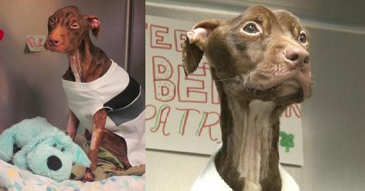 A este perro lo dieron por muerto pero se aferró a la vida y hoy tiene una segunda oportunidad 06