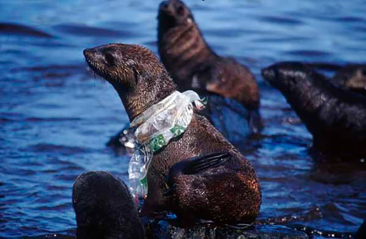 Animales marinos mueren a diario por tus malas decisiones 2