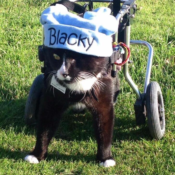 Blacky El minino que robará tu corazón 3