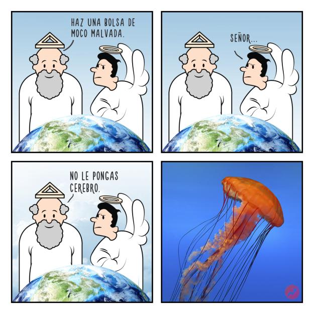 Cómo fueron creados los animales Estas divertidas ilustraciones nos lo mostrarán medusa