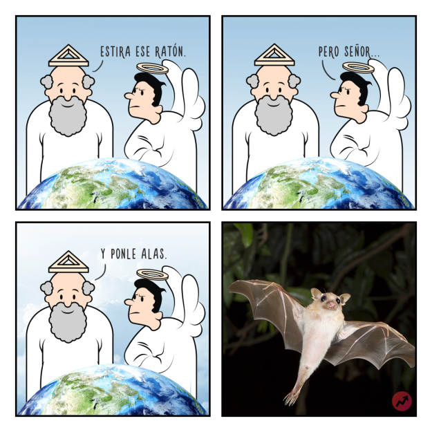 Cómo fueron creados los animales Estas divertidas ilustraciones nos lo mostrarán murciélago