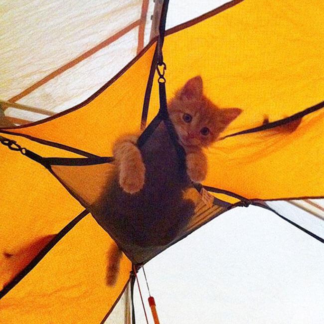 Campamento para gatos 10