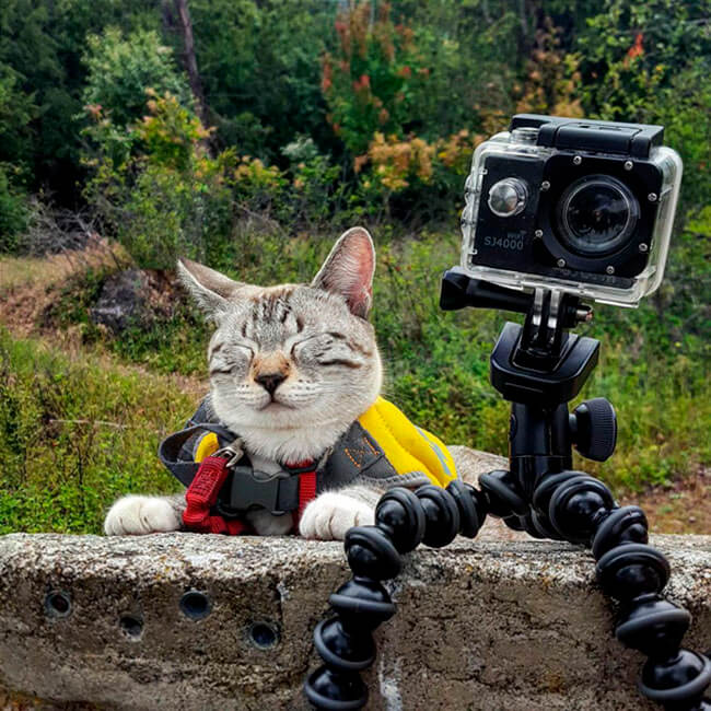 Campamento para gatos 12