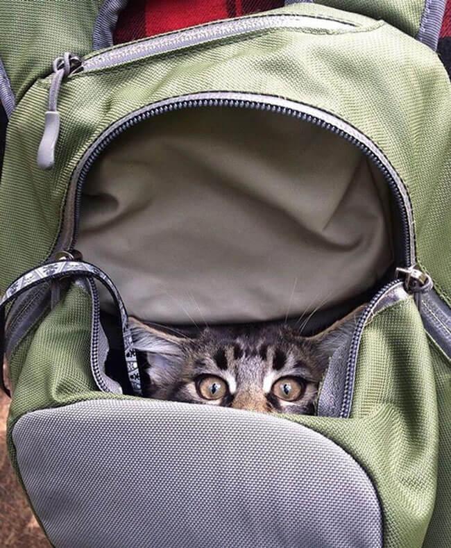Campamento para gatos 6