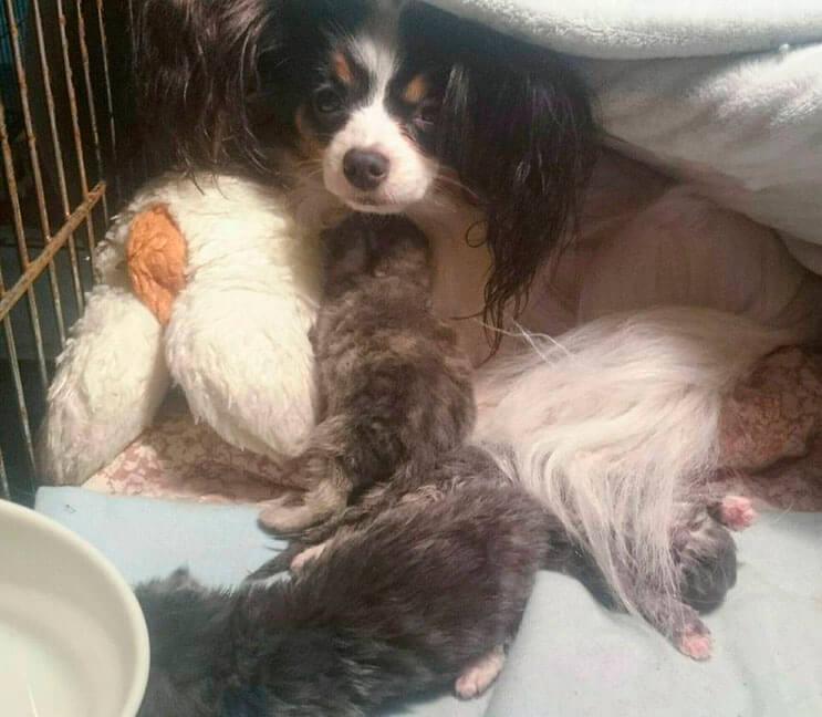 Conoce la adorable historia de Greta, una perrita que adopto tres gatitos 3