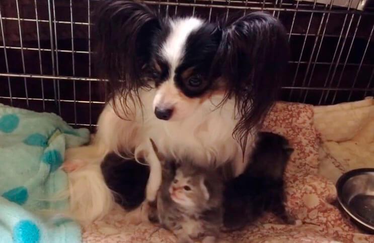 Conoce la adorable historia de Greta, una perrita que adopto tres gatitos