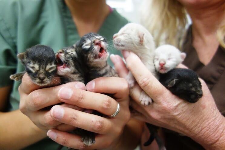 Conoce la historia de seis gatitos abandonados que lograron sobrevivir 1