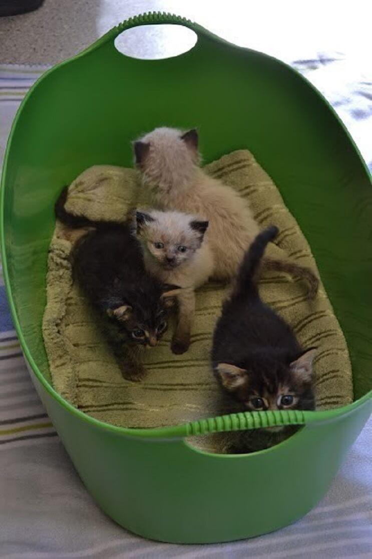 Conoce la historia de seis gatitos abandonados que lograron sobrevivir 2