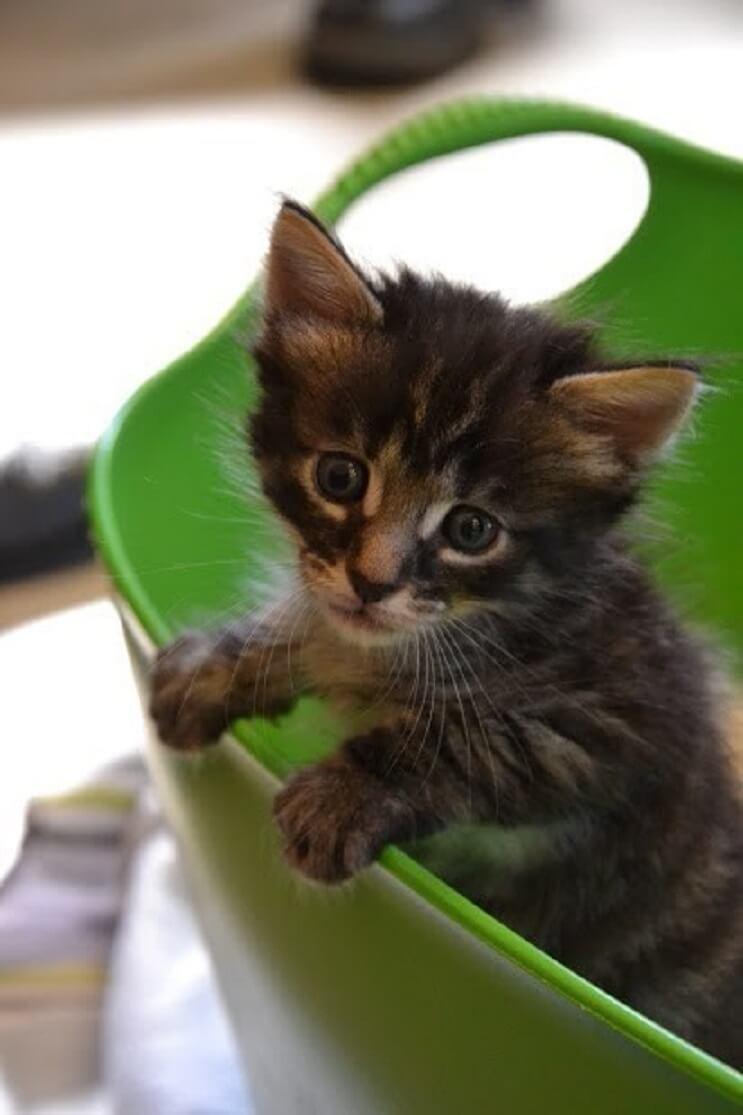 Conoce la historia de seis gatitos abandonados que lograron sobrevivir 3