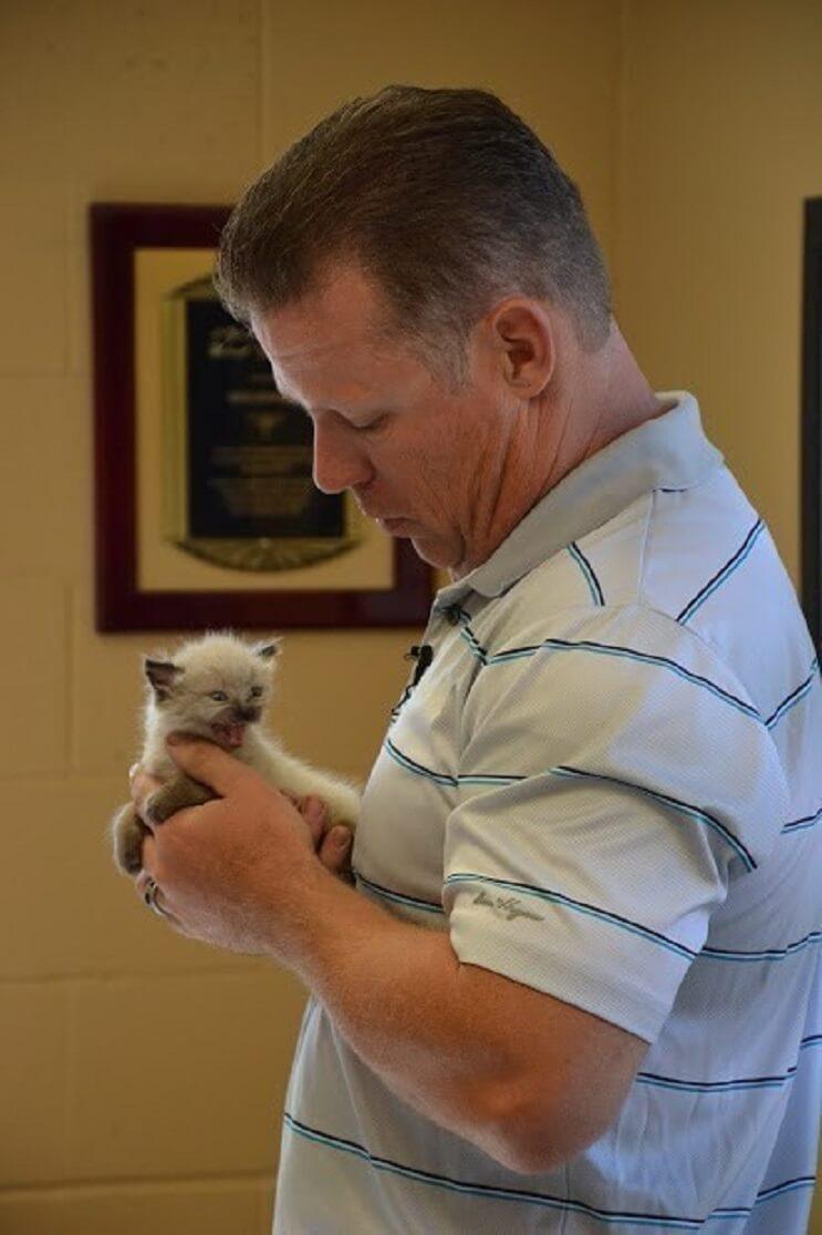 Conoce la historia de seis gatitos abandonados que lograron sobrevivir 7