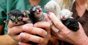 Conoce la historia de seis gatitos abandonados que lograron sobrevivir