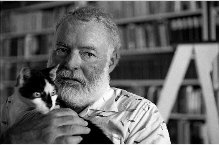 Conoce los magníficos gatos polidáctiles de Ernest Hemingway 1