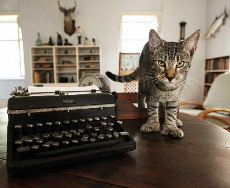 Conoce los magníficos gatos polidáctiles de Ernest Hemingway 10