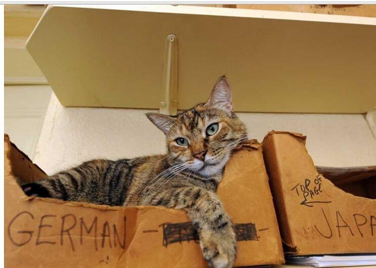 Conoce los magníficos gatos polidáctiles de Ernest Hemingway 14