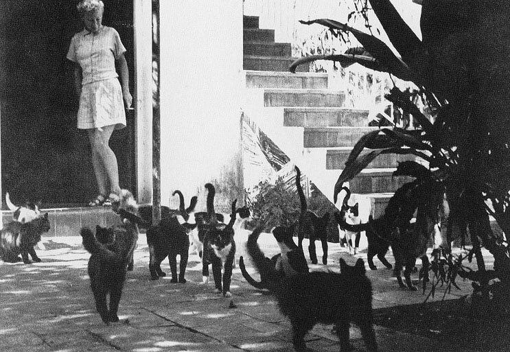Conoce los magníficos gatos polidáctiles de Ernest Hemingway 3.1