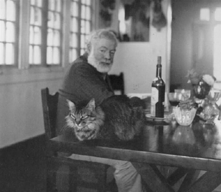 Conoce los magníficos gatos polidáctiles de Ernest Hemingway  3