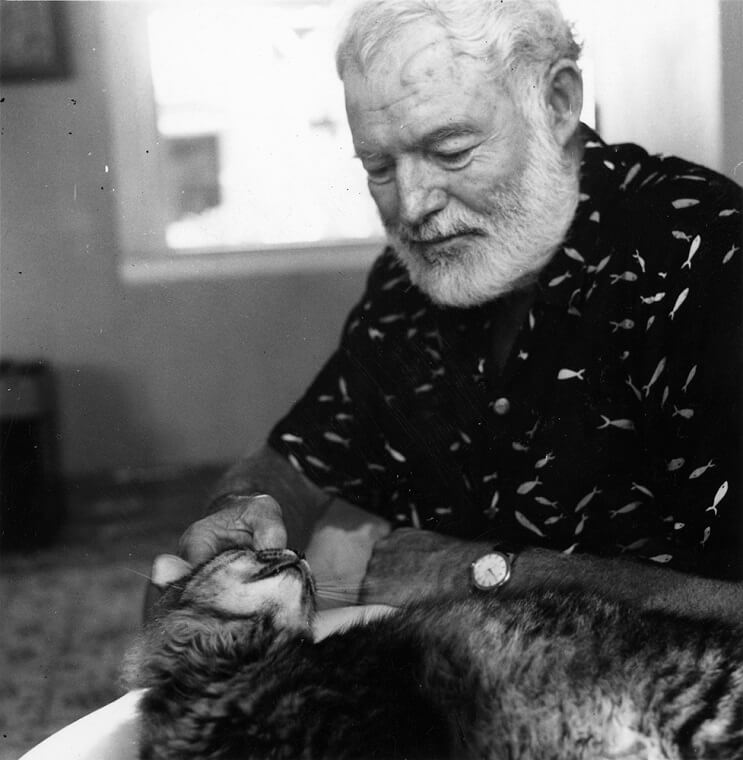 Conoce los magníficos gatos polidáctiles de Ernest Hemingway 4