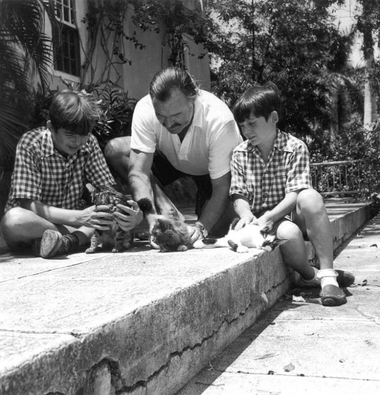Conoce los magníficos gatos polidáctiles de Ernest Hemingway 5