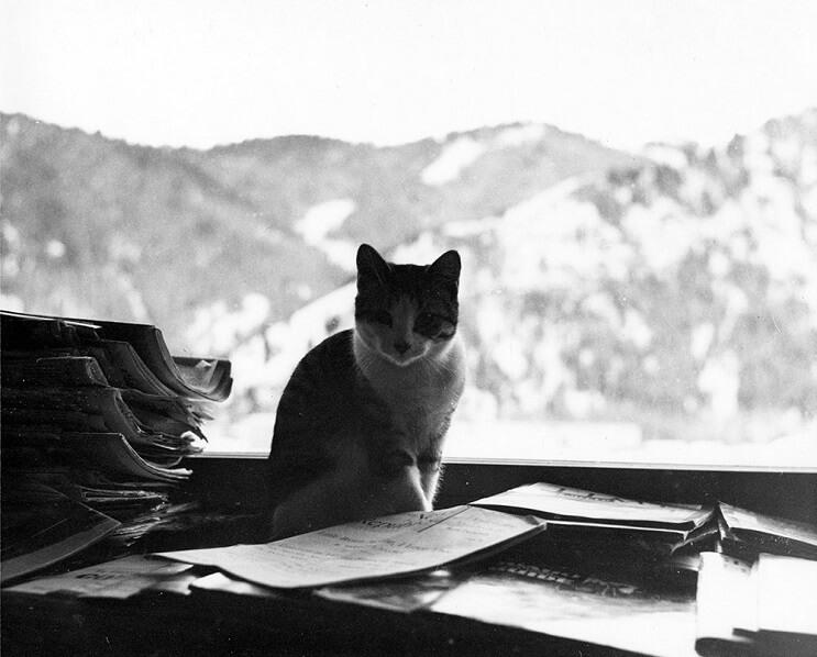 Conoce los magníficos gatos polidáctiles de Ernest Hemingway 9