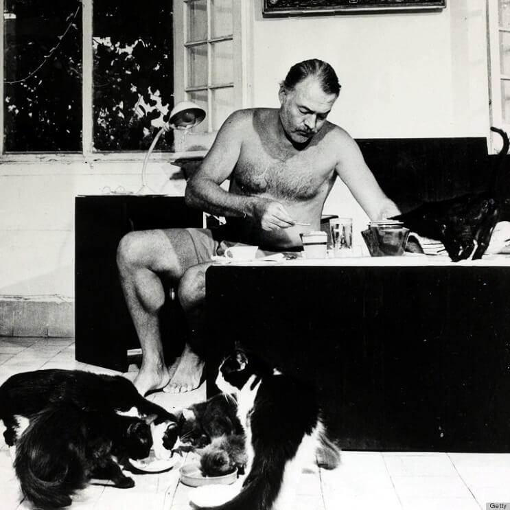 Conoce los magníficos gatos polidáctiles de Ernest Hemingway4.1