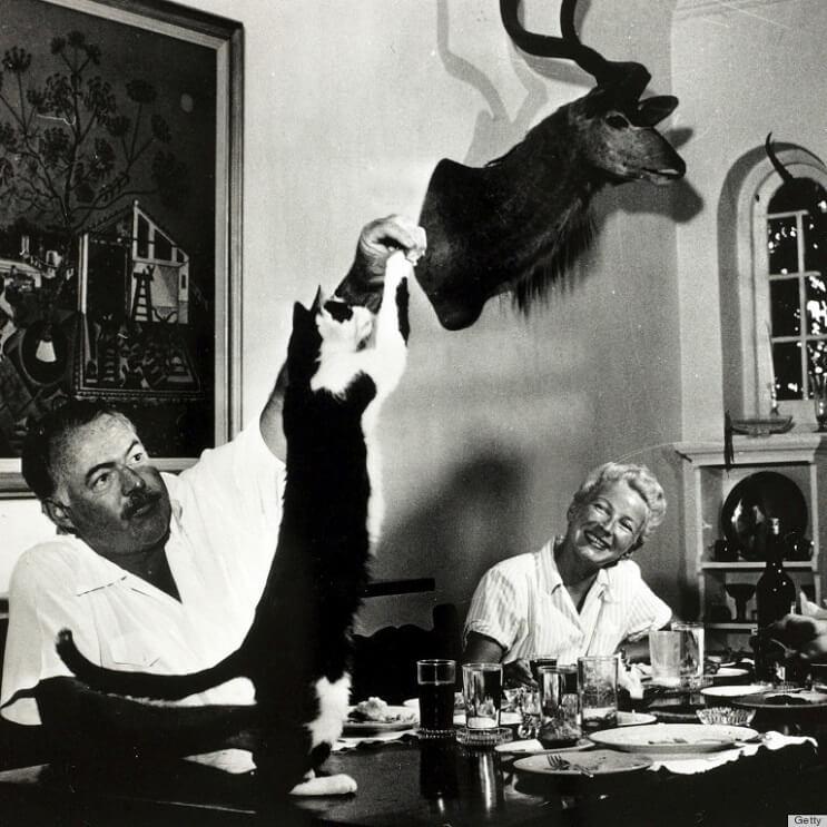 Conoce los magníficos gatos polidáctiles de Ernest Hemingway5.1