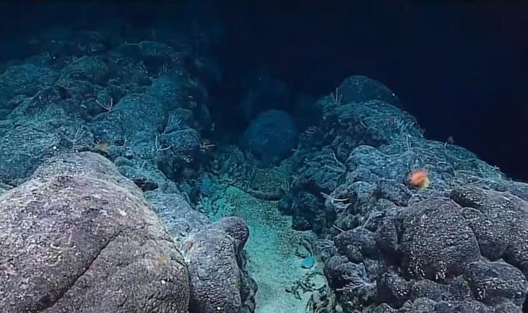 El hallazgo de este pez fantasma genera asombro incluso entre los científicos - océano